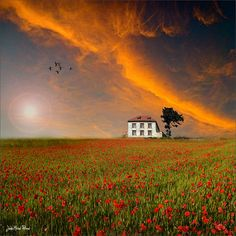 .                                                                                                            Little House on the Prairie             by        Jean-Michel Priaux      on        Flickr