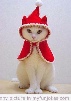 Funny Christmas Animals funny cat jokes  - http://www.myfunjokes.com/funny-animals/funny-christmas-animals-funny-cat-jokes/