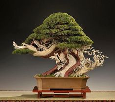 "Great #bonsai trees - Goshin (""protector of the spirit"") is a bonsai created by John Y. Naka. Description from pinterest.com. I searched for this on bing.com/images #bonsaitrees"