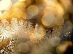 Fern Frost 14 by WeiSanOoi. @go4fotos