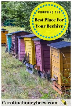Choosing the best location for a beehive? Placement of a beehive is important. Learn where to put your bees and where you should not - Carolina Honeybees Farm via @https://www.pinterest.com/carolinahoneyb