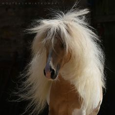 This horse is so beautiful