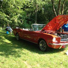 Mustang :)
