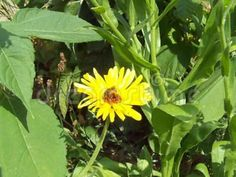 Video about The bee on the flower, and at the end of the flight. Video of meadow, microclimate, grass - 121198068 Bee On Flower, Marigold Flower, Flower Shorts, Grass, Shots, Flowers, Plants, Grasses, Plant