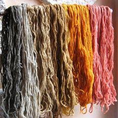 Natural dyeing/teintures naturelles (bourdaine/rumex/oignon/gaillet)