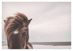 Horse Print Horse Poster Hors Wall Art Horse Download