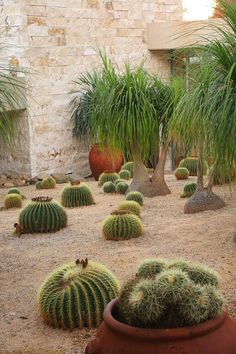 Barrel cactus...I'll take those trees too please!