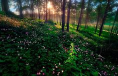 Have a beautiful week from Israel! To start off your week take a look at this amazing picture taken in Northern Israel   #flowers #forest #israel