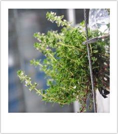 Ikkunaviljelijällä on kasvimaa pullon sisällä | ruukkupuutarha | Ikkunalauta ja parveke | Piha | olotila | yle.fi Herbs, Coffee, Plants, Garden, Food, Coffee Cafe, Garten, Meal, Kaffee