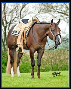 Malone Quarter Horses, home of The Best Martini AQHA Stallion by RL Best of Sudden