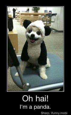 Probably the cutest panda dog ever, he looks soo happy