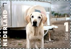 52 Best Search and Rescue dogs images in 2013 | Search, rescue dogs