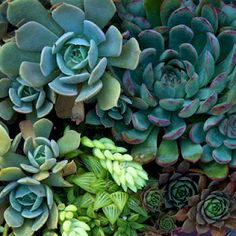 Gone Gardening: How to Make a Succulent Container Garden