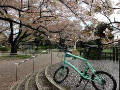 Copyright © victor 様 / 2014 Dash P18 / 桜を見に行ったら途中から雨に打たれてずぶぬれになりました。でも咲くのの花がタイヤについてきれいでした。とっても輪行楽しいです!P18をこれからはカスタマイズしていきたいと思いますのでパーツをどんどん出してください。