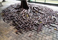 The roots are winning the war against concrete.