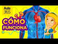 ¿Cómo funciona el Cuerpo Humano? | Videos Educativos para Niños - YouTube Youtube Videos For Kids, Kids Videos, Circulatory System, Respiratory System, School Subjects, Magic Book, Giza, Social Science, Our Body