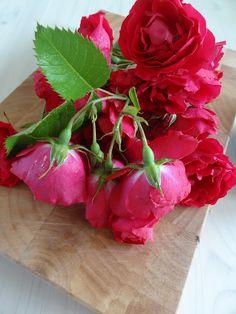 Banebakken Rose, Flowers, Plants, Pink, Plant, Roses, Royal Icing Flowers, Flower, Florals