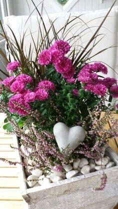 Höstplantering Summer Flower Arrangements, Beautiful Flower Arrangements, Flower Centerpieces, Floral Arrangements, Beautiful Flowers, Seasonal Flowers, Summer Flowers, Diy Flowers, Spring Flowers