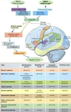 Aphasia Summary. Repinned by SOS Inc. Resources /sostherapy/.