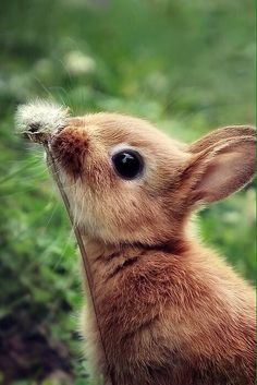 Even sweet little bunnies don't forget to make wishes