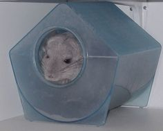 A dust bath for your chinchilla is a must to keep it soft and clean!! NEVER DO A WATER BATH! Its fur will rot off.