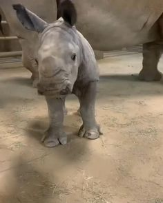 Cute Animal Videos, Funny Animal Pictures, Cute Little Animals, Cute Funny Animals, Beautiful Creatures, Animals Beautiful, Baby Rhino, Baby Elephants, Cute Cat Gif