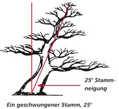Geschwungener Stamm, 25° Neigung Bonsai Pruning, Bonsai Plants, Bonsai Garden, Garden Plants, Bonsai Tree Types, Bonsai Tree Care, Potted Trees, Trees To Plant, Modern Landscape Design