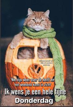 Good Morning Coffee Gif, Thursday, Hugs, Animals, Good Morning, Big Hugs, Animales, Animaux, Animal