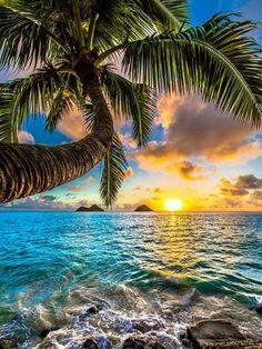 Travel Discover Sunrise on Lanikai Beach Oahu Hawaii Beautiful Sunrise Beautiful Beaches Beautiful Beach Pictures Beautiful Images Landscape Photography Nature Photography Photography Tricks Digital Photography Sunrise Photography Beautiful Nature Wallpaper, Beautiful Landscapes, Beautiful Scenery, Beautiful Gorgeous, Beautiful Ocean, Beautiful Sunrise, Beautiful Beaches, Landscape Photography, Nature Photography