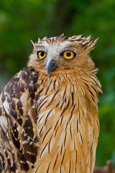 Owl portrait -
