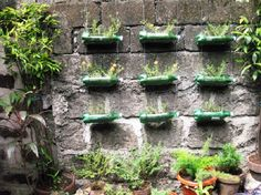 waste material, Plastic Bottle Waste As Green Plants Container: plastic waste recycling become crafts
