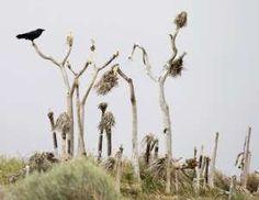 Drought around the world - MARIO ANZUONI/Newscom/Reuters