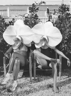 Ladies in Waiting // Dina Broadhurst Photomontage, Dina Broadhurst, Lady In Waiting, Photoshop, Shooting Photo, Alphonse Mucha, Collage Art, Collages, Art Inspo