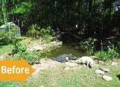 before makeover of pond, landscape, backyard, weeds, Garden Makeover, Ponds Backyard, Outdoor Furniture Sets, Outdoor Decor, More Pictures, Weed, The Past, Exterior, Landscape