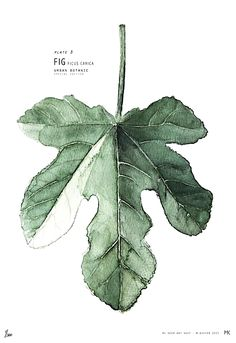 """""""I saw my life branching out before me like the green fig tree in the story. From the tip of every branch, like a fat purple fig, a wonderful future beckoned and winked."""" ~Sylvia Plath, The Bell Jar"""
