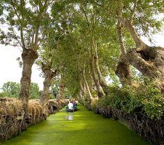 Marais Poitevin www.visit-poitou-charentes.com/en/Marais-poitevin
