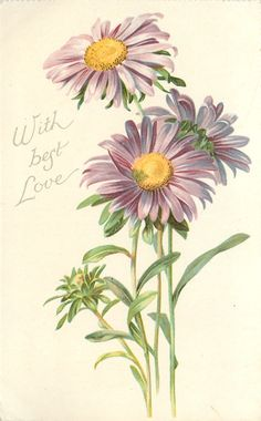 WITH BEST LOVE  purple daisies with yellow centers