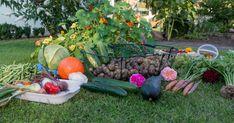 Siintääkö haaveissasi oma kasvimaa? Takuulla luomut ja tuoreet porkkanat, kaalit, salaatit, herneet? Hyppää nyt mukaan juttusarjaan, jossa opit kaikki ruoankasvatustavat kotipuutarhassa. Aloitetaan siitä perinteisestä kasvimaasta!