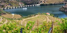Douro Valley - Portugal. First demarcated wine region in the world, UNESCO humanity heritage.