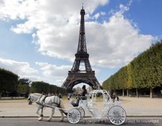 Image detail for -LIMOUSINE CARRIAGE Horse Carriage Pleasure driving carriage Greenville ...