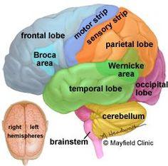 Neurological System Disorders