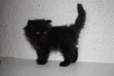 Cute Kitten !