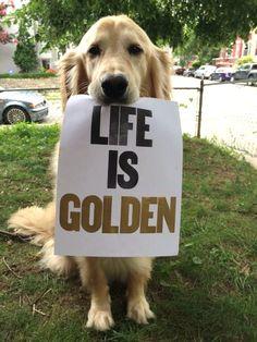 Life is Golden with a Golden Retriever
