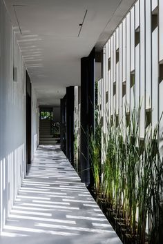 White latticed screens and trailing planting shade the glazed facade of this day spa by MIA Design Studio from the midday sun Tropical Architecture, Sustainable Architecture, Architecture Details, Landscape Architecture, Interior Architecture, Landscape Design, Lobby Design, Design Entrée, Lattice Wall