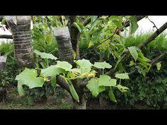 Nevídaný spôsob pestovania uhoriek v plastových fľašiach: Šetríte miesto a vďaka tejto domácej výžive sa môžete tešiť aj na bohatú úrodu! Animals And Pets, Farmer, Herbs, Make It Yourself, Plants, Youtube, Gardens, Gardening, Ideas