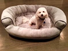 """482 Likes, 19 Comments - SoHome Market (@sohomemarket) on Instagram: """"Wouldn't Fido love our Deluxe Comfy Pooch pet bed? And wouldn't you like to win it for FREE? Not…"""""""