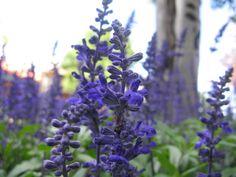 Estes Park Colorado, Purple Flowers Estes Park Colorado, Colorado Rockies, The Mountains Are Calling, John Muir, Rocky Mountain National Park, Winter Park, Rocky Mountains, Purple Flowers, National Parks