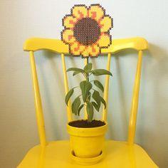 Sunflower hama beads by englaskreativeverden - https://de.pinterest.com/pin/374291419008382167/