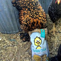 Louanne Twinkle Blossom! Where have you gone? I can't seem to find her.. Oh, wait! There she is. Head deep in an #eggcellent bag of #ChickenCrack.. LOL!
