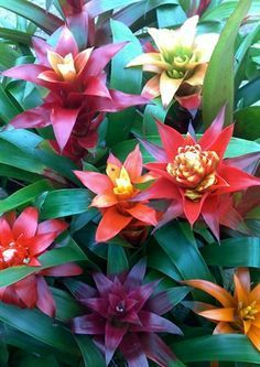 How to care for a bromeliad. Such a beautiful flowering plant!
